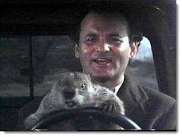 Bill Murray and groundhog