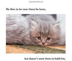 1cats4